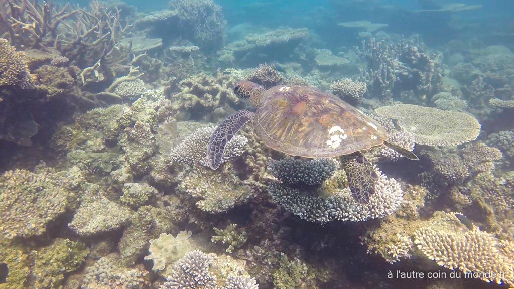 Monkey Mia Coral Bay (590km, 6h) – jour 5, 6 et 7 de notre road trip sur la côte ouest australienne